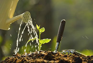 watering-lawn-st-pete