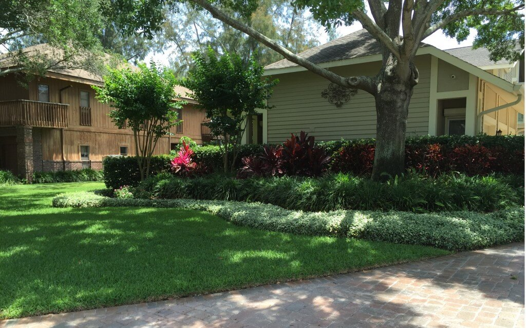 healthy green grass and shrubs