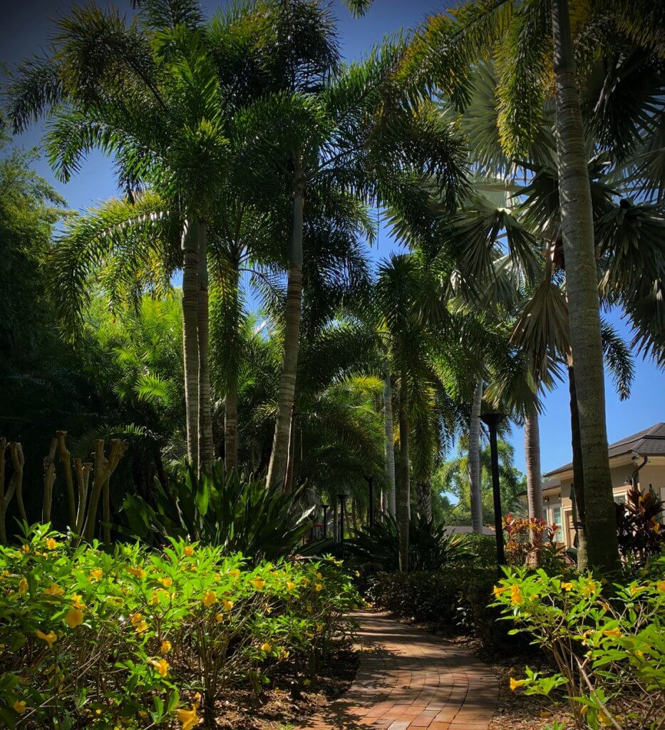 thriving-palm-trees-st-pete-fertilizer-wide